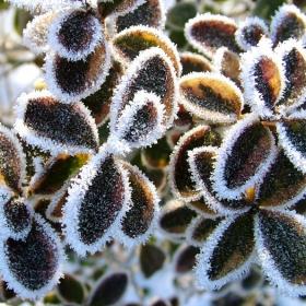 зимни красоти