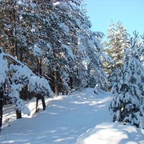 Зима в Родопите
