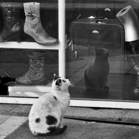 Котак без чизми