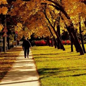 Есента на преминалата младост...