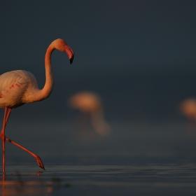 Розови мистерии на разсъмване