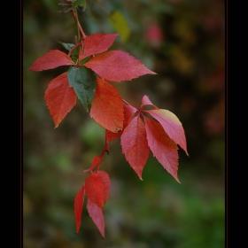 Есен е!...