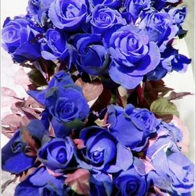 Китка .........сини рози