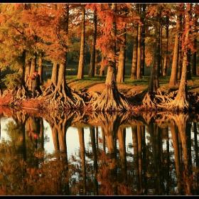 корени