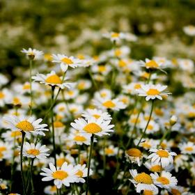 Спомен от пролетта :)