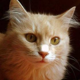 Портрет на едно  коте - Микаела