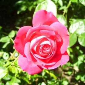 най-красивото цвете