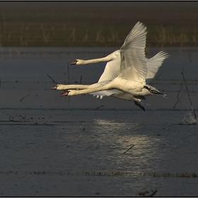 3-ка Лебеди