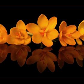 ~пролетно хорце~2