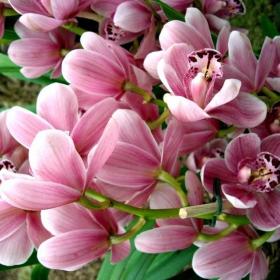 9909 цветя(не е поетично, но пък е романтично посвещение към съпругата ми)