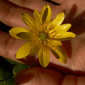 пролетно жълто