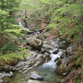 Природата на Стара планина