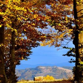 Златна есен по никое време или какво се случва сред дърветата...