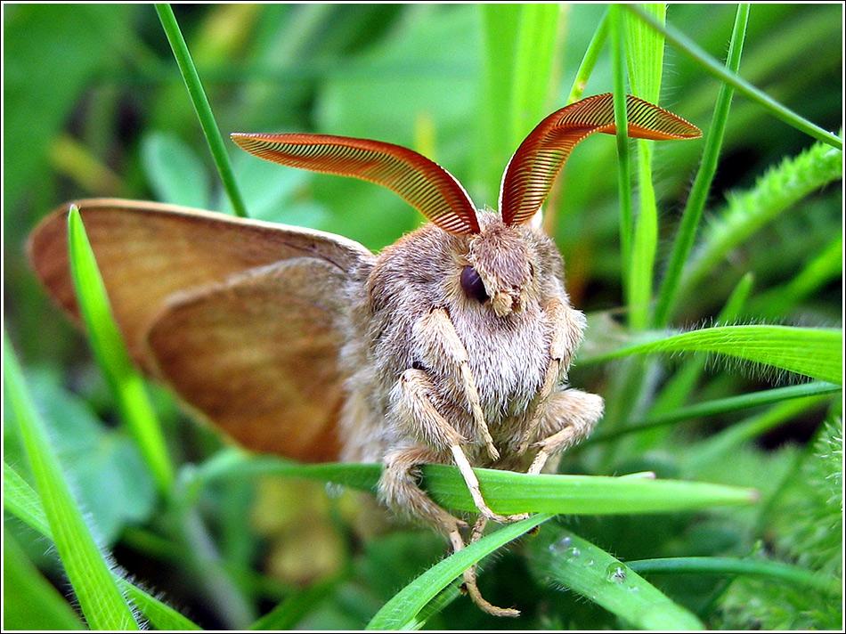 един по-различен пеперуд