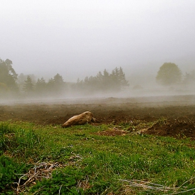 Майски мъгли