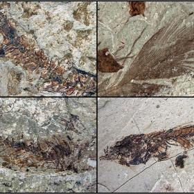фосили