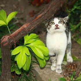 Котето, котето е най-важно... ;)