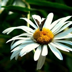 Нектарът на живота е и в най-обикновеното цвете
