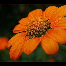 оранжево...