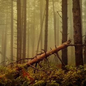 Дълбоко в гората