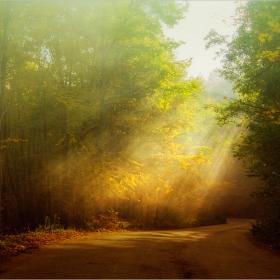 Слънчеви багри с привкус на Равногорска есен