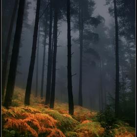 есенно мъгливо