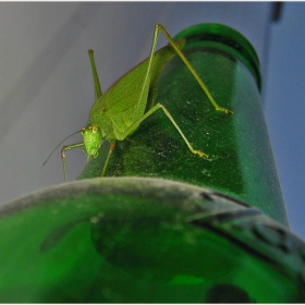 Със светло пиво,към светло бъдеще,амаа....хлъц...аре кАжи ми как се слиза после???