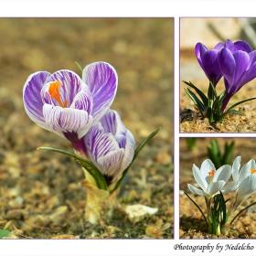 Пролет пукна...