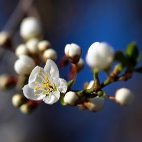 Пролетни мотиви
