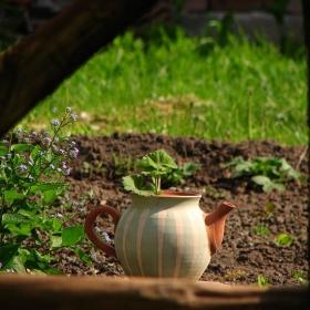 От една селска градинка