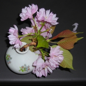Still life with Japanese cherry