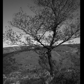 Дървото
