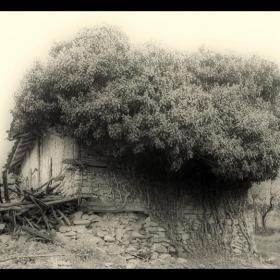 Къщата с дървото