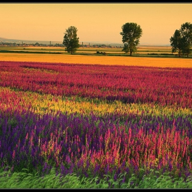 Цветове на залеза