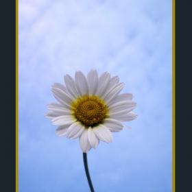 Небесното цвете