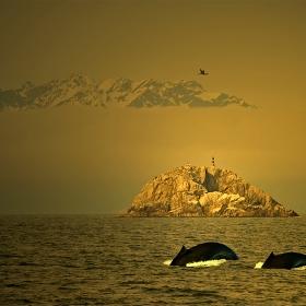 Островът на Монте Кристо
