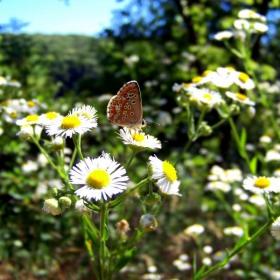 Аз съм волна пеперуда и летя от цвят на цвят ;D