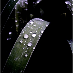 По следите на дъжда