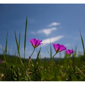 Розово в Green park :)