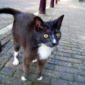 Мис Улична Котка 2009