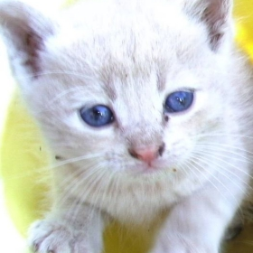 сладко ммалко коте
