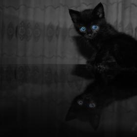 my blue-eyed boy 2