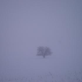 призрачното дърво