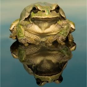 Портрет на една жаба