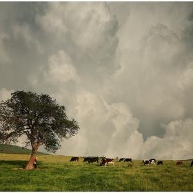 За чичото, пастирът и стадото...