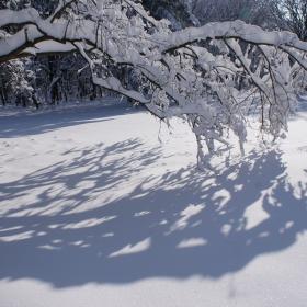 Лапите на снега