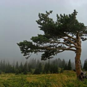 Едно доста фотогенично дърво ;)