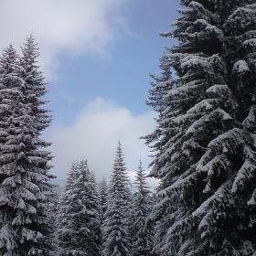 зимно пейзажче