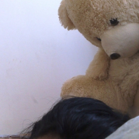 Fuck Guys - Sleep With Teddy Bears!