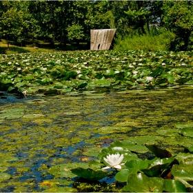 августовски водни цветове